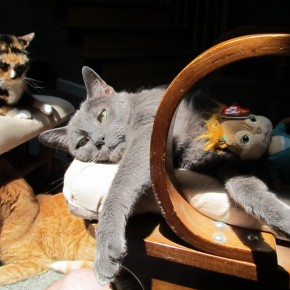 Spinsters End Up with Cats, and Spinster Cats End Up With ... Stuffed Animals?